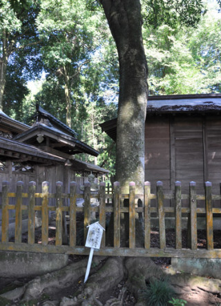 額田神社の真榊